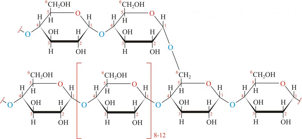 Cấu tạo của glycogen