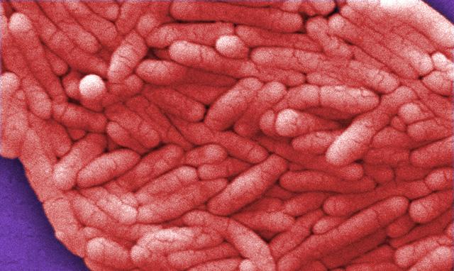 Đặc điểm của Salmonella là gì?